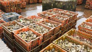 Limpieza cajas para industria alimentaria